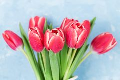 тюльпан 01 красного цвета Стоковое фото RF