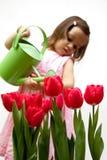 тюльпан красного цвета litlle девушки bouqet droping Стоковые Изображения