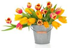 тюльпан красоток Стоковые Фото