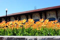 Тюльпан на парке 2 держателя королевском стоковое изображение rf