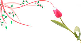 тюльпан орнамента стоковое изображение rf