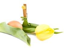 тюльпан пасхального яйца украшения зайчика Стоковые Фотографии RF