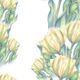 Тюльпан - состав цветков just rained Стоковая Фотография RF