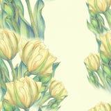Тюльпан - состав цветков just rained Стоковое Изображение RF