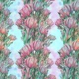 Тюльпан - состав цветков just rained Стоковые Изображения