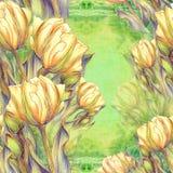 Тюльпан - состав цветков just rained Стоковые Изображения RF