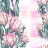 Тюльпан - состав цветков just rained Стоковые Фотографии RF