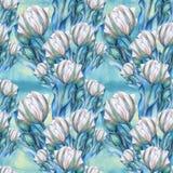 Тюльпан - состав цветков just rained Стоковая Фотография