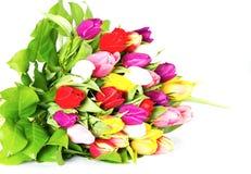 тюльпан цветастых цветков свежий Стоковая Фотография