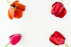 Тюльпан цветет на белой таблице с космосом экземпляра на ваша верхняя часть v текста Стоковые Изображения