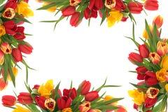 тюльпан цветка граници Стоковое Изображение RF