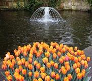 тюльпан цветка кровати Стоковая Фотография