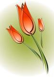 тюльпан иллюстрация штока