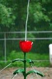 тюльпан petrodvorets фонтана Стоковые Фото