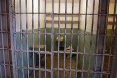 тюрьма клетки alcatraz Стоковая Фотография
