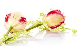 2 тюльпана и зеленых шарики Стоковая Фотография RF