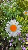 9 тюльпанов весны настроения пестроткаными установленных изображениями чудесных Стоковое Изображение RF