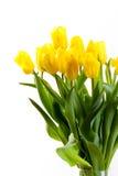 тюльпаны букета предпосылки белые Стоковые Фотографии RF