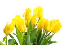 тюльпаны букета предпосылки белые Стоковая Фотография RF