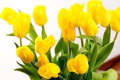 тюльпаны букета предпосылки белые Стоковая Фотография