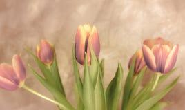 тюльпаны букета розовые Стоковая Фотография RF