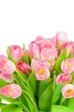 тюльпаны букета свежие Стоковые Изображения RF