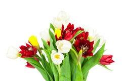 тюльпаны букета свежие Стоковая Фотография
