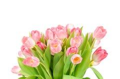 тюльпаны букета свежие Стоковое фото RF