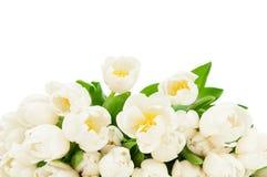 тюльпаны букета свежие Стоковые Фотографии RF