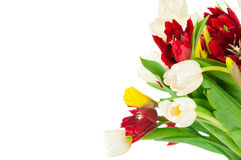 тюльпаны букета свежие Стоковые Изображения