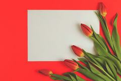 Тюльпаны весны цветут и карточка чистого листа бумаги на красной предпосылке стоковое фото rf