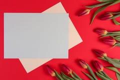 Тюльпаны весны цветут и карточки чистого листа бумаги на красной предпосылке стоковые изображения rf