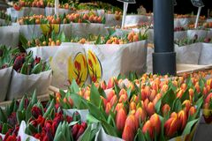 Тюльпаны Амстердам стоковые фото