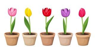 Тюльпаны в баках. бесплатная иллюстрация