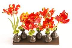 Тюльпаны в вазах на белой предпосылке Стоковая Фотография RF