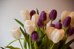Тюльпаны в крупном плане вазы Стоковая Фотография RF
