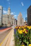 Тюльпаны в цветени на бульваре Мичигана в Чикаго Стоковое Изображение RF