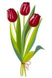 тюльпаны красного цвета 3 Стоковые Изображения RF