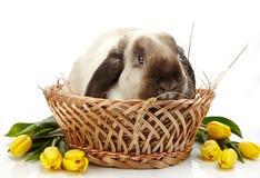 Тюльпаны кролика и желтого цвета Стоковая Фотография