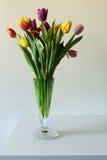 Тюльпаны на белой предпосылке, торжество Стоковая Фотография RF