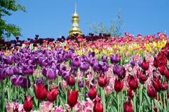 Тюльпаны на холме и куполе церков за ими Стоковые Фотографии RF