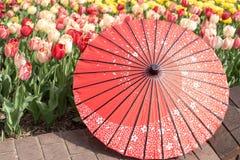 Тюльпаны оранжевого красного цвета желтого цвета зонтика парасоля в поле Стоковое Изображение RF
