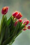Тюльпаны перед окном Стоковое Изображение RF