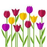 Тюльпаны простого дизайна Стоковые Изображения
