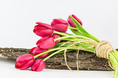 Тюльпаны сада связанные с рафией Стоковые Изображения RF