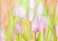 тюльпаны сада Стоковая Фотография