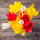 Тюльпаны сверху Стоковое Фото