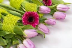 Тюльпаны сирени и розовый gerbera на белой предпосылке Стоковое Фото