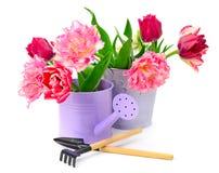 Тюльпаны собрания и инструменты украшения Стоковое фото RF