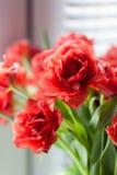 тюльпаны dof крупного плана красные отмелые Стоковые Изображения